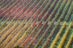 Wijngaard in de herfst 1 Royalty-vrije Stock Foto