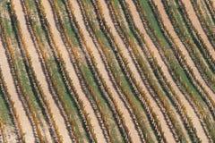 Wijngaard in de herfst 2 Stock Afbeelding
