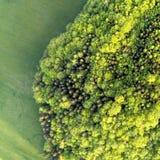 Textuur van gemengd bos op een zonnige de zomerdag dichtbij grasgebied Luchtdronfoto stock foto