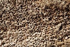 Textuur van geperforeerde steen Stock Afbeeldingen