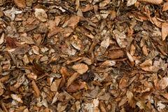 Textuur van gevallen bladeren ter plaatse Stock Afbeelding