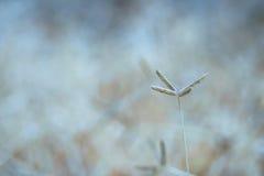 Textuur van gras Stock Afbeeldingen