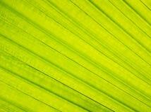 Textuur van Groen Royalty-vrije Stock Afbeeldingen