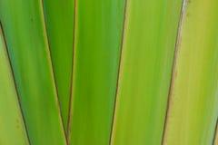 Textuur van groen blad als achtergrond Royalty-vrije Stock Fotografie