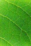 Textuur van groen blad, close-up Stock Afbeelding