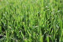 Textuur van groen gras De groene achtergrond van het voetbalgras natuurlijk gras zijaanzicht Vers besnoeiingsgras Gazon voor de a stock foto's