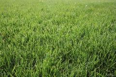 Textuur van groen gras De groene achtergrond van het voetbalgras natuurlijk gras zijaanzicht Vers besnoeiingsgras Gazon voor de a stock fotografie