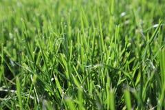 Textuur van groen gras De groene achtergrond van het voetbalgras natuurlijk gras zijaanzicht Vers besnoeiingsgras Gazon voor de a royalty-vrije stock afbeelding