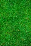 Textuur van groen gras op het gehele kader stock foto's