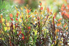 Textuur van groen mos stock afbeelding