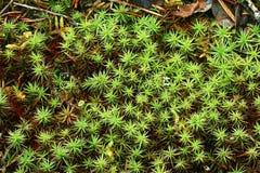 Textuur van groen mos stock fotografie