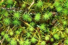 Textuur van groen mos royalty-vrije stock afbeelding