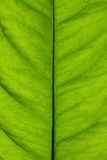 Textuur van groen zonnig blad Royalty-vrije Stock Foto's