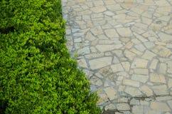 Textuur van groene bladeren op linkerkant en textuur van grijze rotsen op rechterkant, afdeling van het wild met stedelijk het le stock foto's