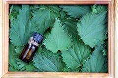 Textuur van groene verse netelbladeren in een kader stock foto