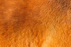 Textuur van het bont van het rode paard in de zon royalty-vrije stock afbeelding