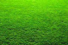Textuur van het Gras van Nice de Groene stock foto