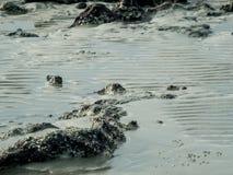 Textuur van het overzeese strand met rots Stock Afbeeldingen