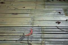 Textuur van houten gebruik als natuurlijke achtergrond stock afbeelding
