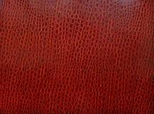 Textuur van huid van een krokodil van Bordeauxkleur Stock Afbeelding