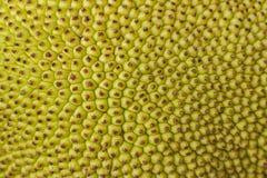 Textuur van jackfruit stock foto's