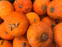 Textuur van mooie oranjegele ronde heerlijke pompoenen, groenten voor Halloween met staarten De achtergrond stock afbeelding