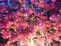 Textuur van mooie zachte natuurlijke purpere rode bloemen met bloemblaadjes en takken van licht-aangestoken lampen bij nacht Royalty-vrije Stock Foto