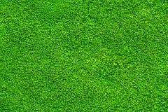 Textuur van mos voor patroon en achtergrond Royalty-vrije Stock Afbeelding
