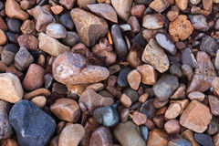 Textuur van natte glanzende kleine overzeese stenen Stock Afbeeldingen