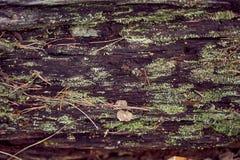 Textuur van oud die hout in het bos, met mos en vegetatie wordt behandeld stock fotografie