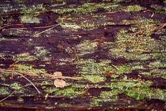 Textuur van oud die hout in het bos, met mos en vegetatie wordt behandeld royalty-vrije stock afbeelding