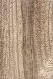 Textuur van oud droog doorstaan gebarsten hout, barsten langs de vezels van logboeken, close-up abstracte achtergrond stock foto