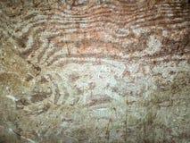 Textuur van oud hout Stock Foto's