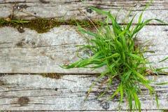 Textuur van oud houten raad en gras Natuurlijke achtergrond voor ontwerp, schermbeveiliging stock foto's