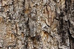 Textuur van oude boom in de voorgrond met barsten en details royalty-vrije stock afbeelding