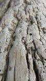 Textuur van oude boomschil Stock Fotografie