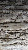 Textuur van oude boomschil Royalty-vrije Stock Foto