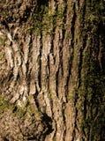 Textuur van oude boomschors met een warm licht en een mos, plaats voor uw embleem, aarddetails stock afbeeldingen