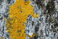 Textuur van oude concrete grungemuur met korstmosmos mol Royalty-vrije Stock Afbeeldingen