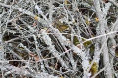 Textuur van oude droge rot weinig dunne oude stokken, takjes, stro met knopen en droge die bladeren met barsten met mos vylzy men royalty-vrije stock afbeeldingen