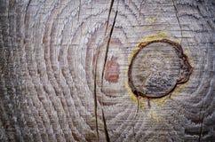 Textuur van oude eik stock foto