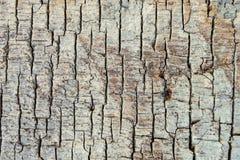 Textuur van oude houten met gespleten verrotting royalty-vrije stock foto's