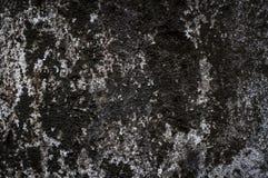 Textuur van oude mosmuur Stock Foto