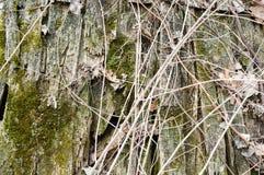 Textuur van oude rotte oude eetstokjes, takjes met knopen en droge die bladeren met barsten en knopen met mos worden behandeld stock foto's