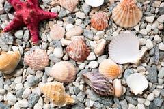Textuur van overzeese die bodem met kleurrijke zeeschelpen en zeester wordt behandeld Royalty-vrije Stock Afbeeldingen