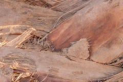 Textuur van palmschors Natuurlijke achtergrond stock foto's