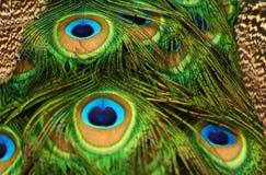 Textuur van pauwstroop royalty-vrije stock fotografie