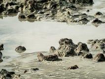 Textuur van rots op zee strand Royalty-vrije Stock Afbeeldingen