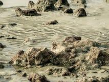 Textuur van rots op zee strand Stock Afbeeldingen