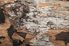 Textuur van schors van de grunge de donkere boom Stock Afbeelding